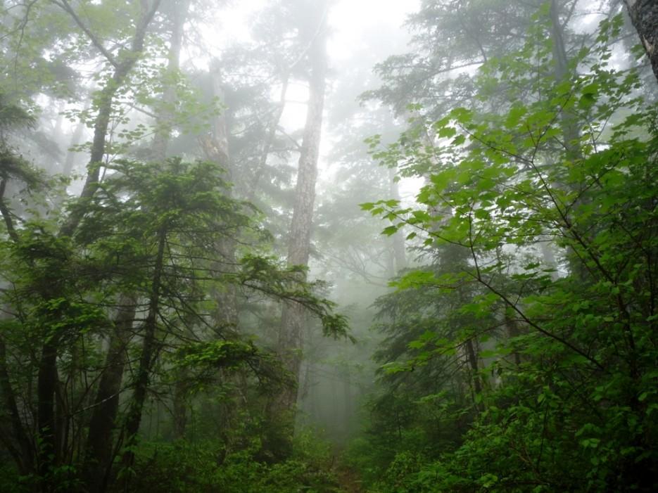 Туман. Тропа по кольцу на Фалазу. | гора Фалаза (Литовка). Шкотовский р-он.