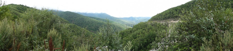 На перевале перед Дальнегорском | Природа в Приморье