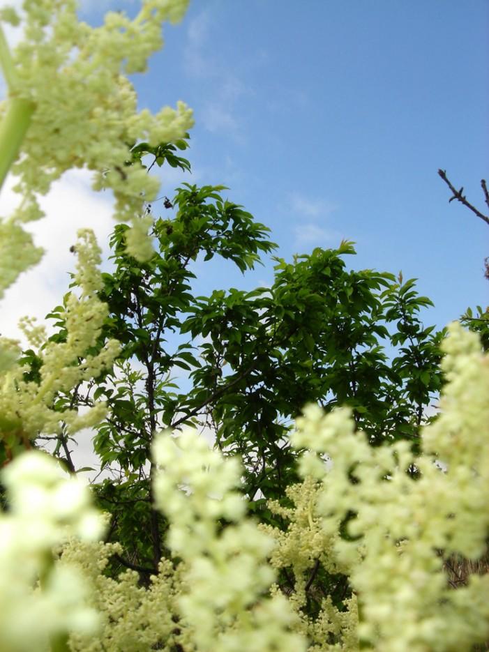 Весна пришла! Лесозаводск | Всё живое