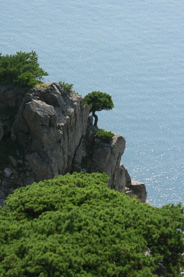 Одинокая сосна на скале мыса Бабкина. Маяк Гамова. Полуостров Гамова. Хасанский район. | Маяк Гамов. Хасанский район.