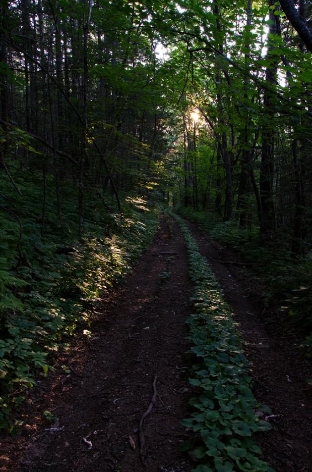 И лучик солнца нам укажет путь.   Дорога ведущая к вершине сопки Туманной. | Хребет Большой Воробей, г.Туманная