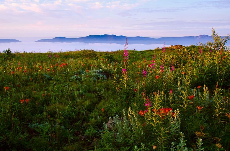 Сад цветов посреди моря облаков. Вершина сопки Туманная. | Хребет Большой Воробей, г.Туманная