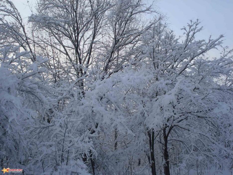 Фото 2261 | «Восток» Арсеньев — первый снег