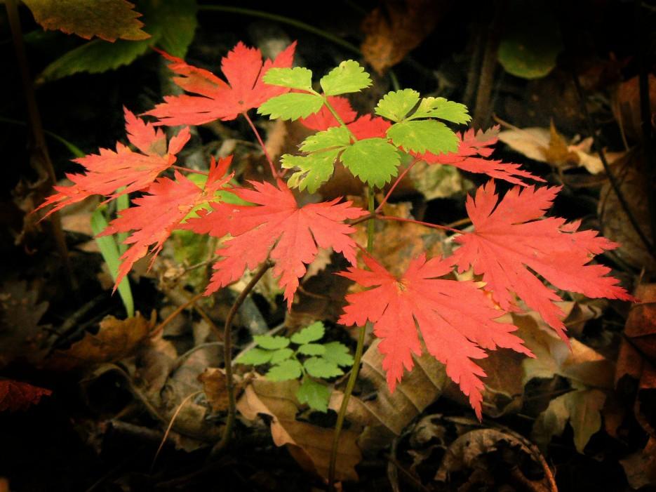 Осенний букет. | Кравцовские водопады