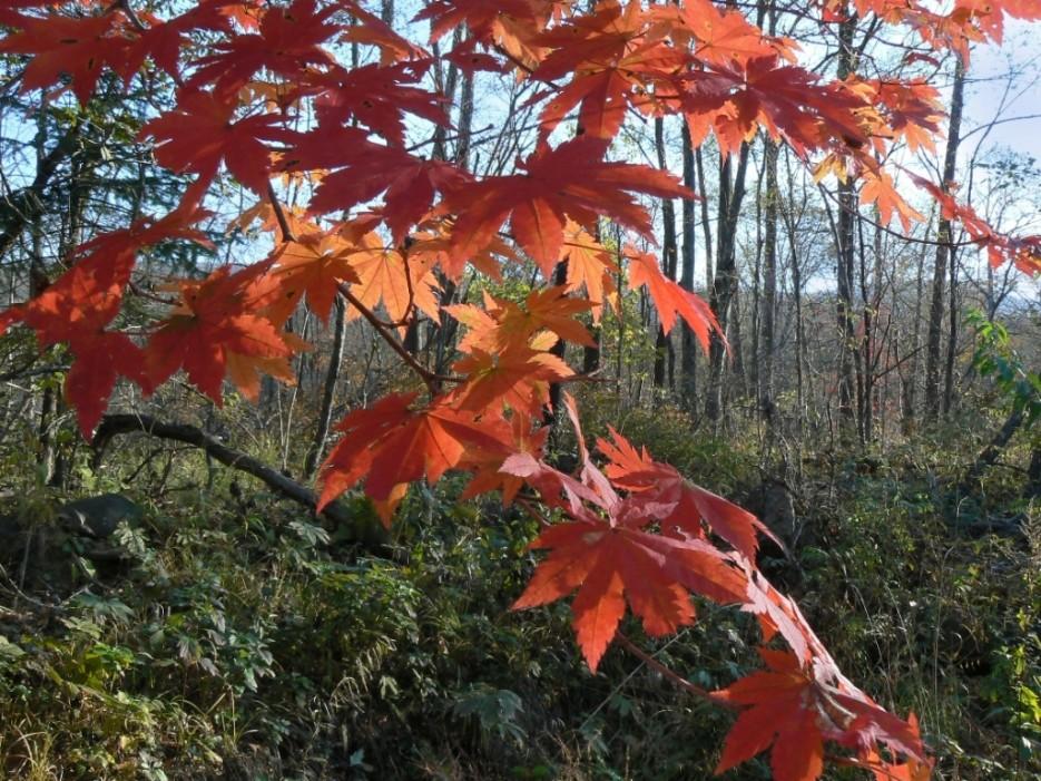 Осень   Кравцовские водопады