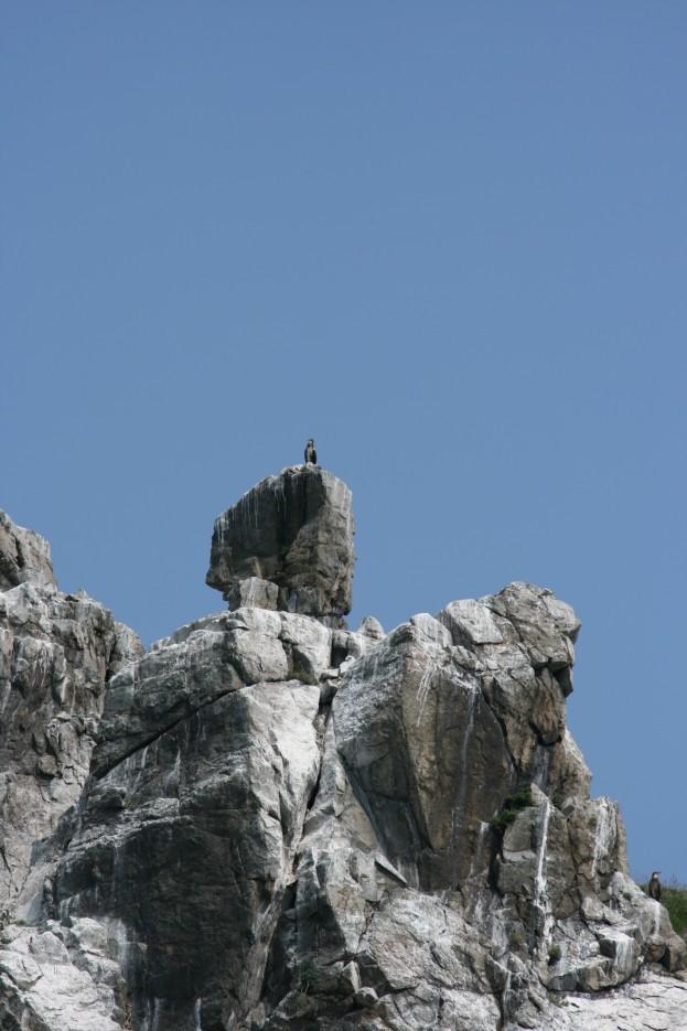 Одинокий гордый птиц. В окрестностях Андреевки. Полуостров Гамова. Хасанский район. | Морская прогулка вокруг полуострова Гамова.