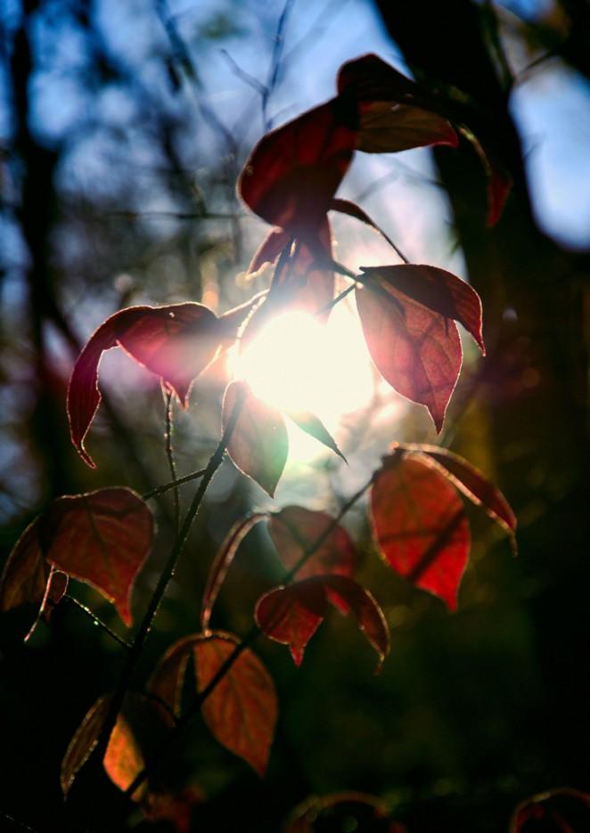 Сквозь листья пронзает солнечный свет. По тропе не доходя до ключа Смольного. | Смольные пороги Ливадийского хребта. Золотая осень.