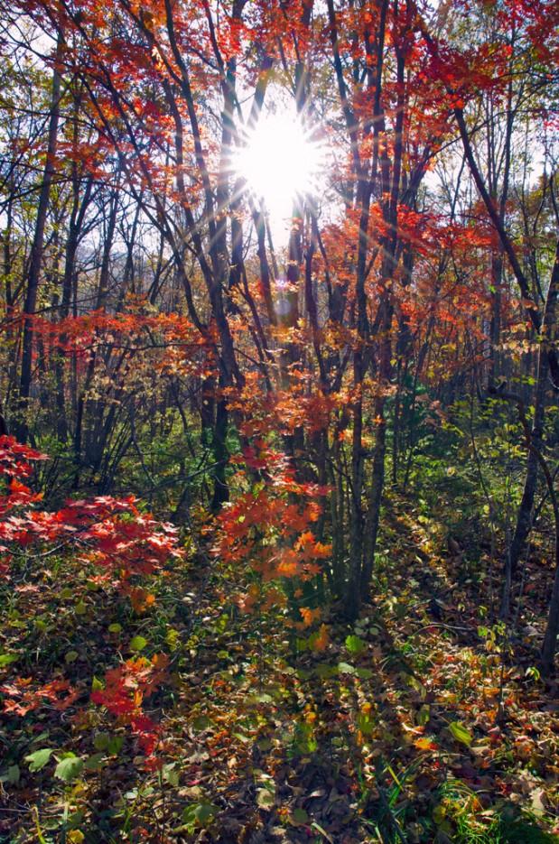 Восход в лесной чаще. По тропе не доходя до ключа Смольного. | Смольные пороги Ливадийского хребта. Золотая осень.