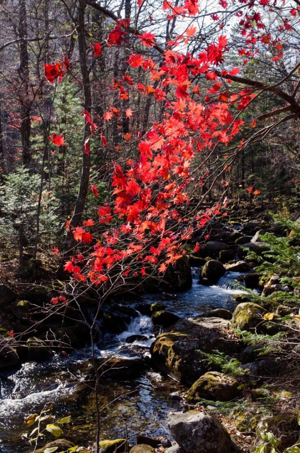 Ключ Смольный. И красный клён склонившись над рекой, мне тихо в ухо зашептал.   Смольные пороги Ливадийского хребта. Золотая осень.