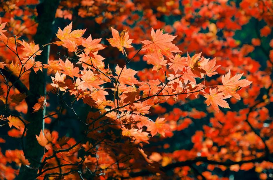 Что такое осень..? По тропе не доходя до ключа Смольного. | Смольные пороги Ливадийского хребта. Золотая осень.