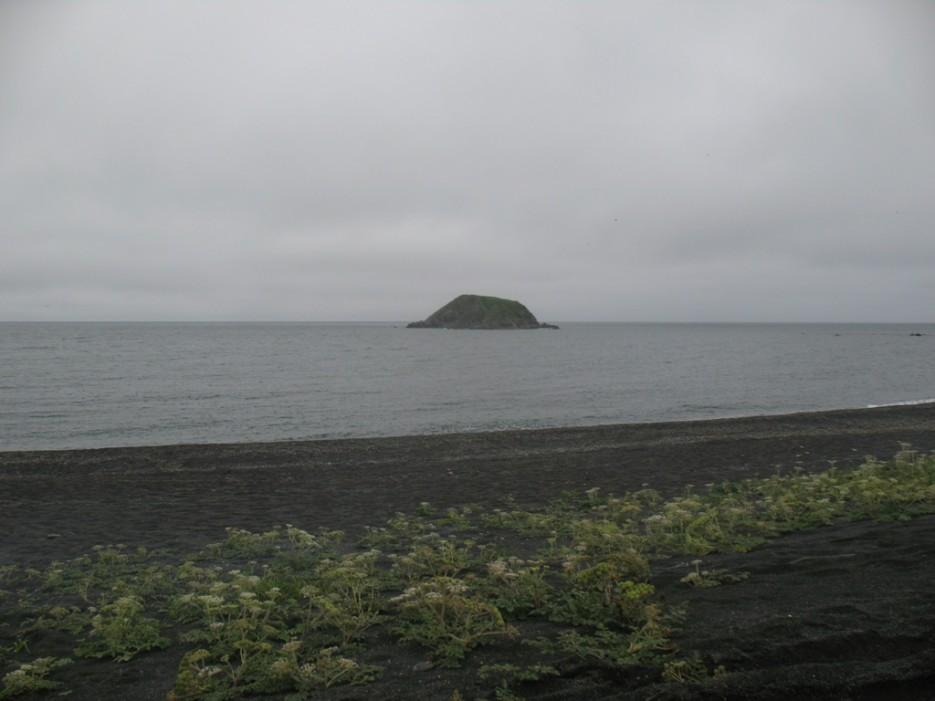 прибрежные заросли | Зарубино