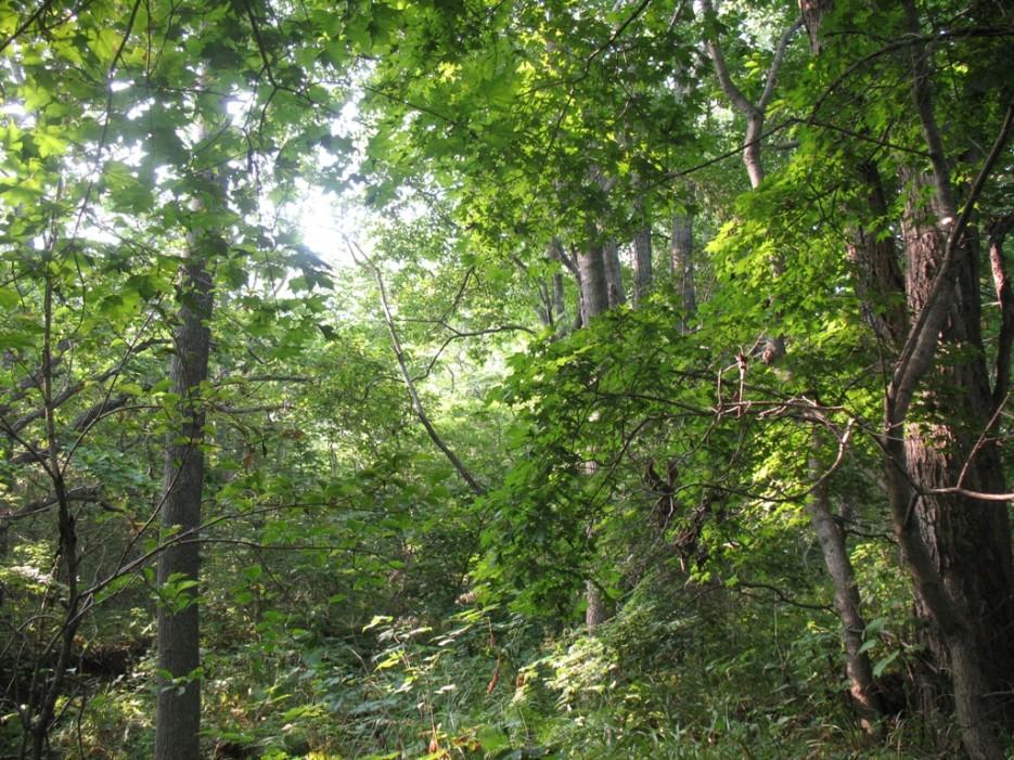 лес | мыс Игнатьева