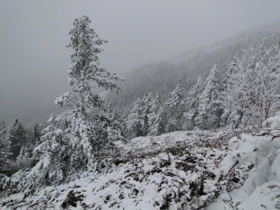 Склон Фалазы, идет снег. | гора Фалаза (Литовка). Шкотовский р-он.