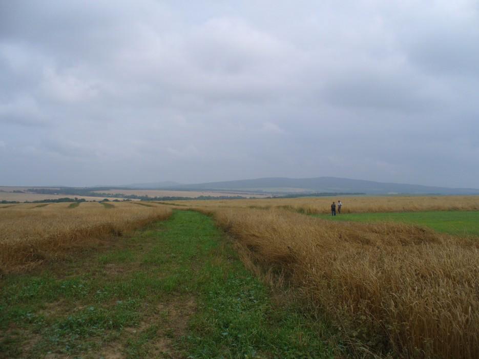 Поле и небо - отличный пейзаж | Михайловский район, село Осиновка