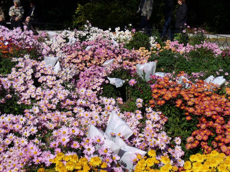 Целое поле цветов | Ботанический сад