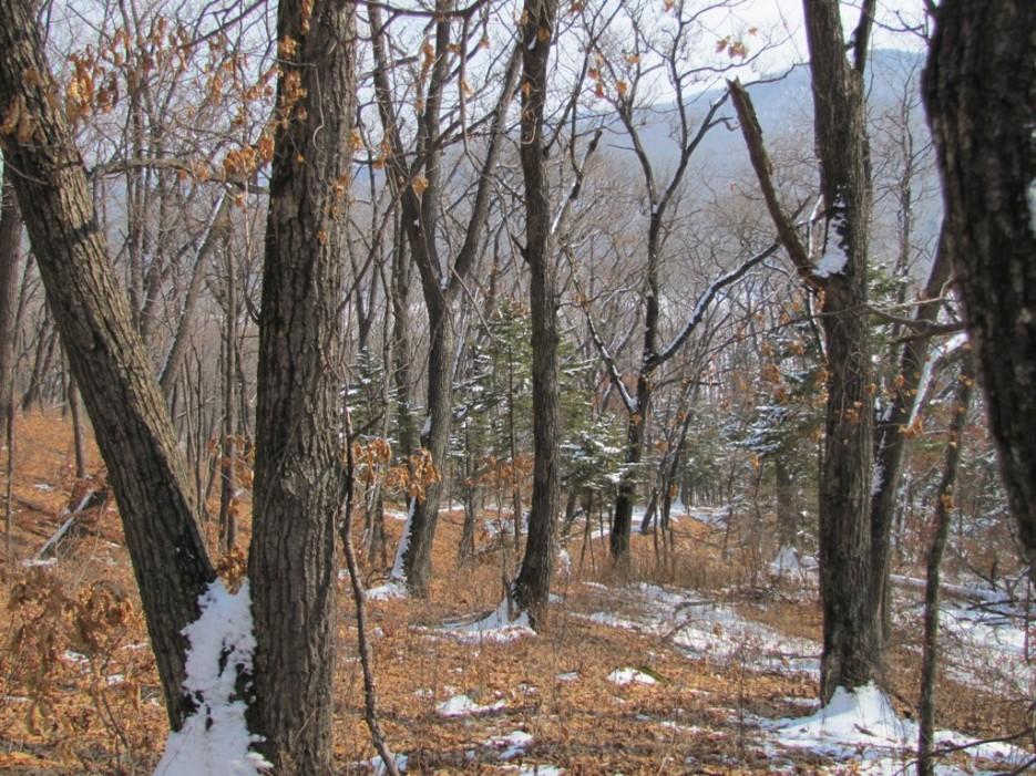 лес | хребет Центральный и Седанкинское водохранилище