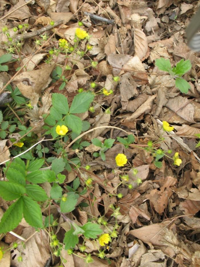 весна | хребет Центральный и Седанкинское водохранилище