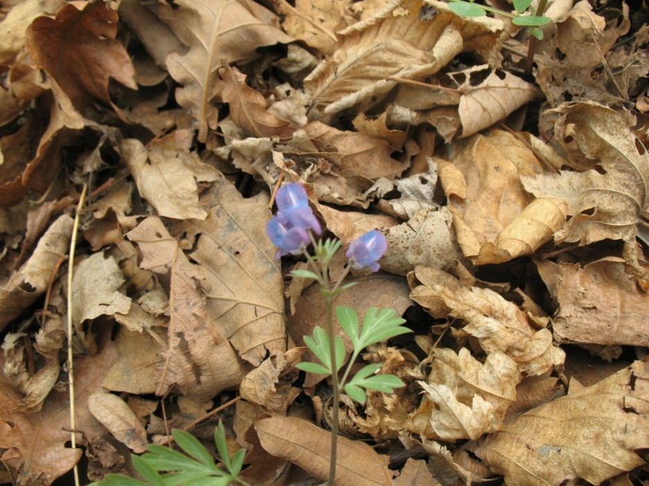 цветок | хребет Центральный и Седанкинское водохранилище