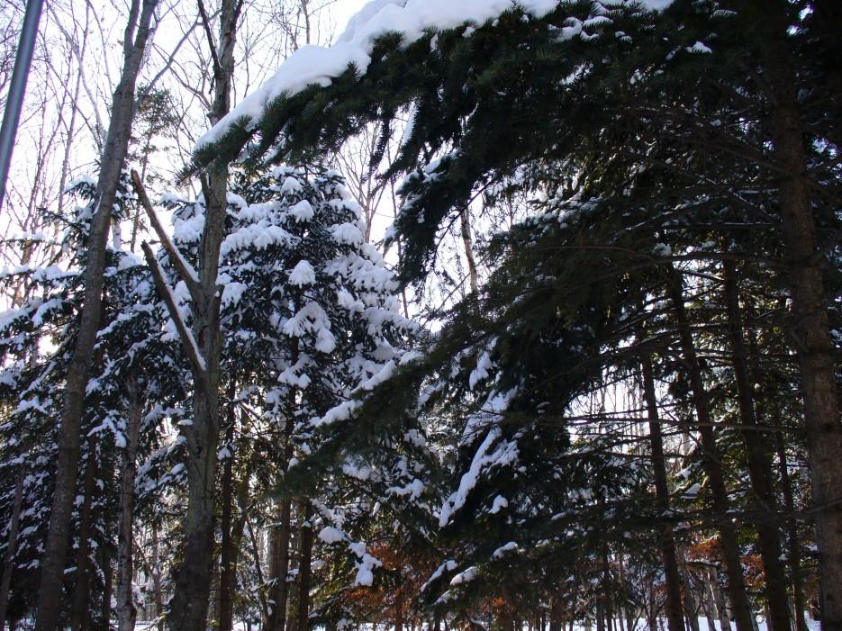 Зимний лес | Океанский военный санаторий