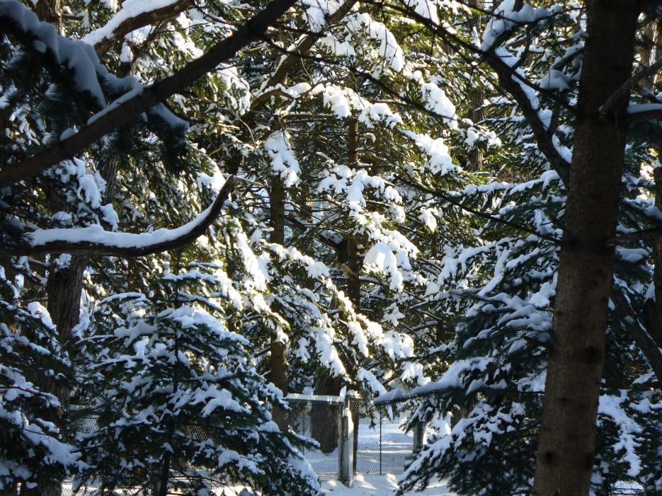 Зимний лес   Океанский военный санаторий
