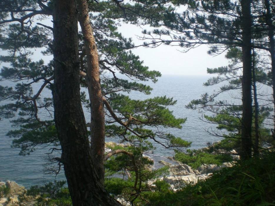 остров зарос сосной | остров Томящегося сердца бухта Теляковского