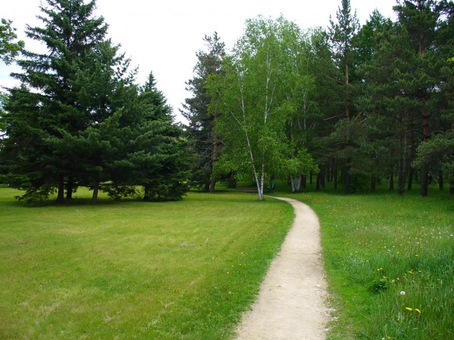 Красивая дорожка среди разнообразных деревьев | Шмаковка, санатории и их окресности