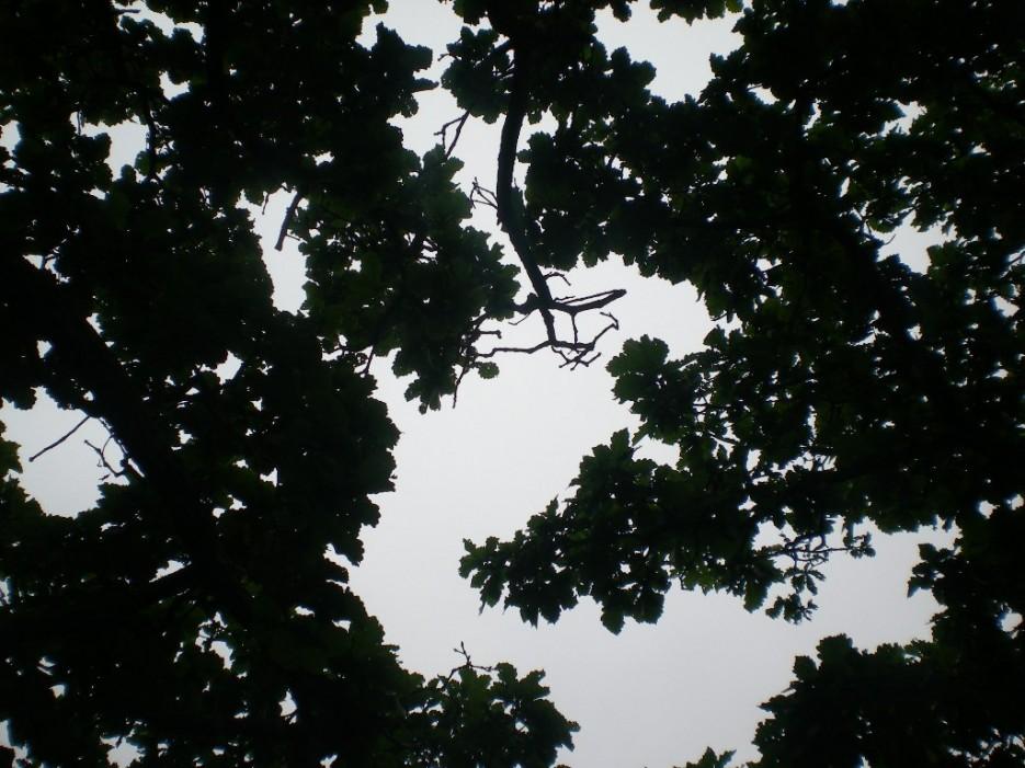 взгляд в небо | Бухта Песчанка