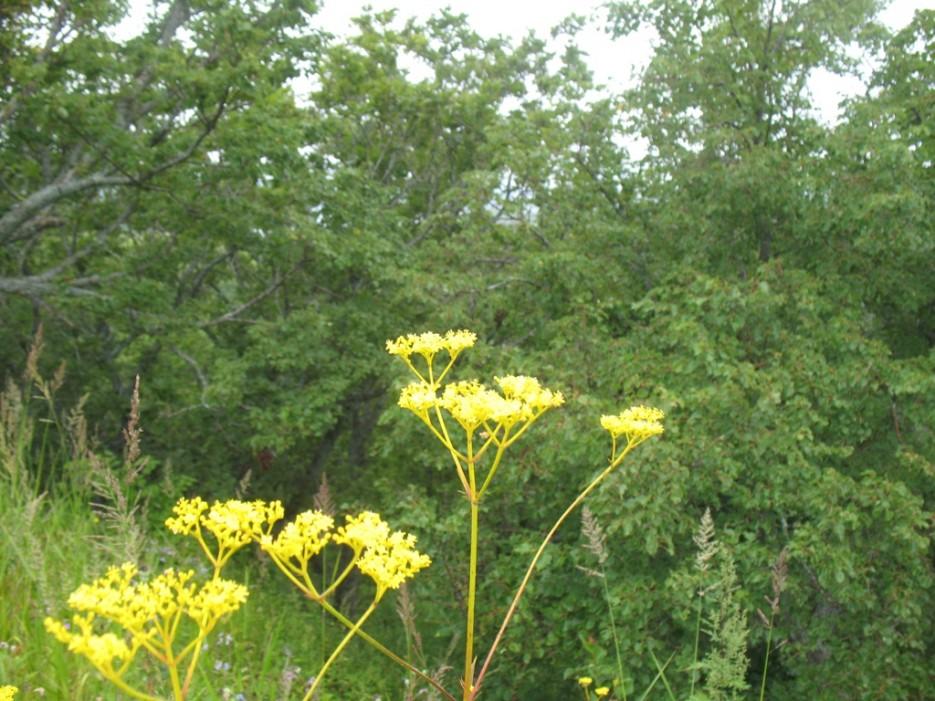 цветы | Бухта Песчанка