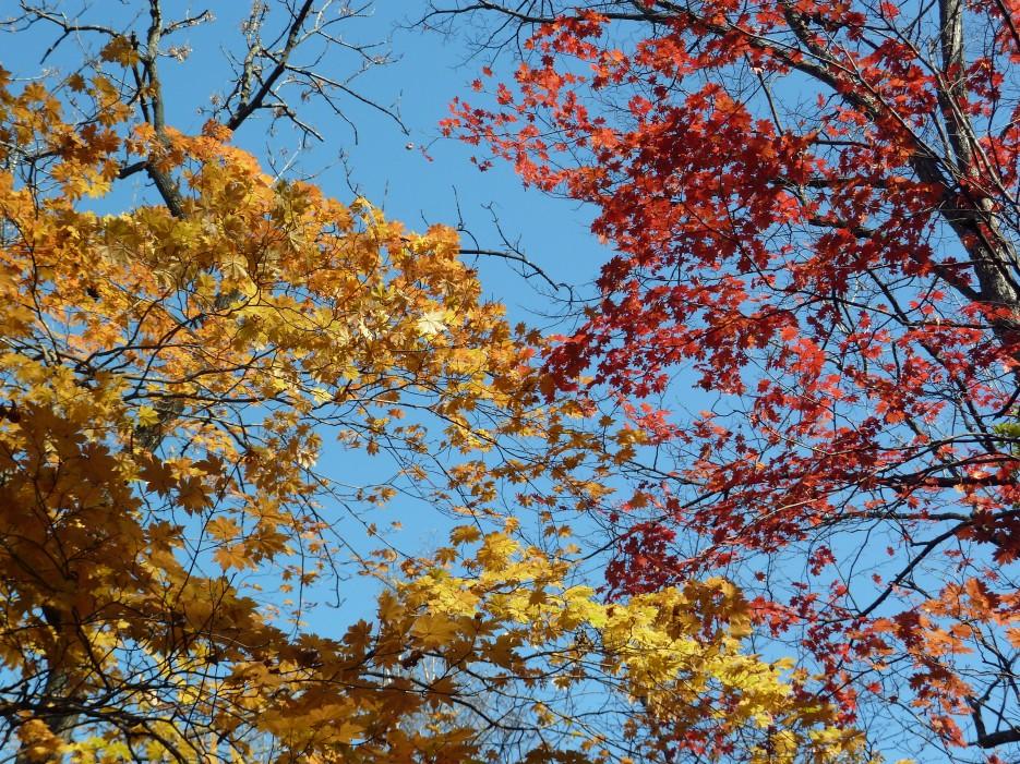 В багрец и золото одетые леса | Ботанический сад