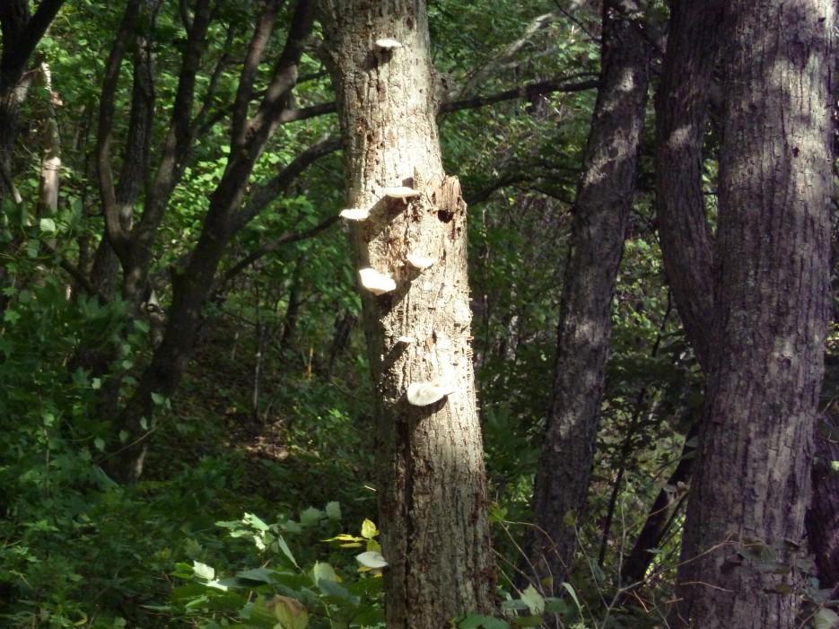 Лес на острове | Походы на остров Русский