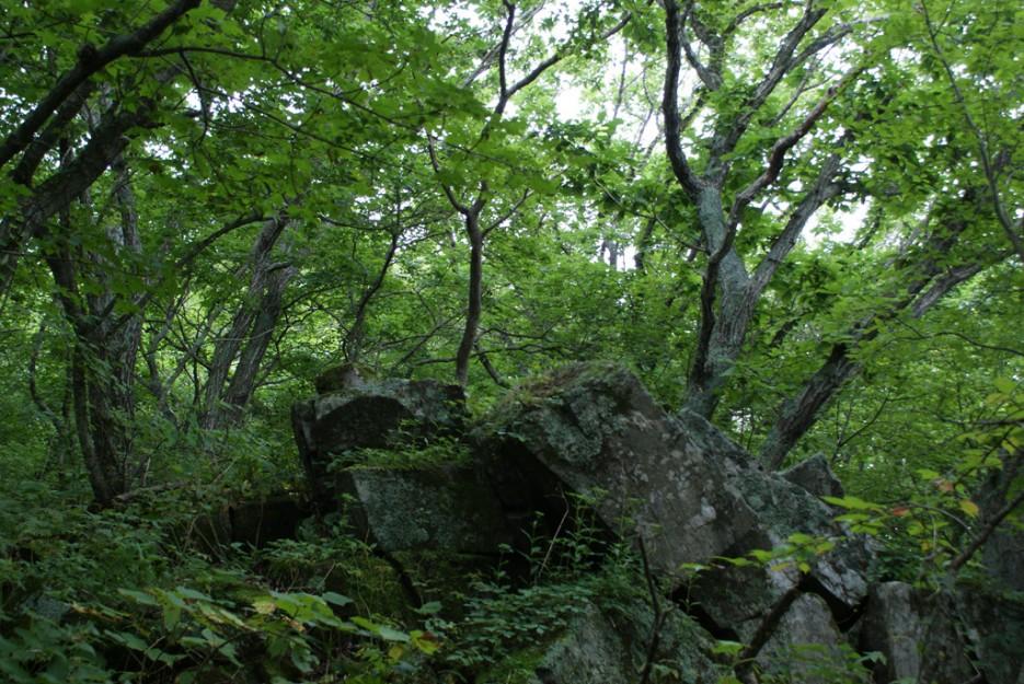 А вдоль тропинки валуны в лесу лежат. | Мыс Островок Фальшивый и остров Фуругельма