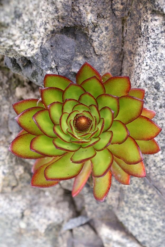 Каменный цветок. | Мыс Островок Фальшивый и остров Фуругельма