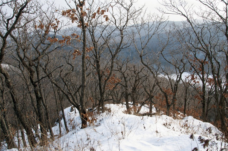 Справа Седанкинское водохранилище. | Ботанический сад и Седанкинское водохранилище. Зима-Весна.