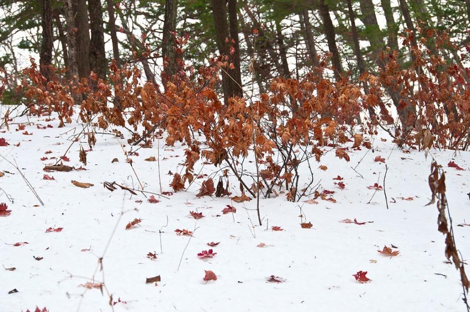 А осень всё ещё напоминает о себе. | Ботанический сад и Седанкинское водохранилище. Зима-Весна.