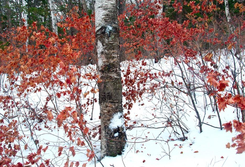 А осень всё ещё напоминает о себе.   Ботанический сад и Седанкинское водохранилище. Зима-Весна.