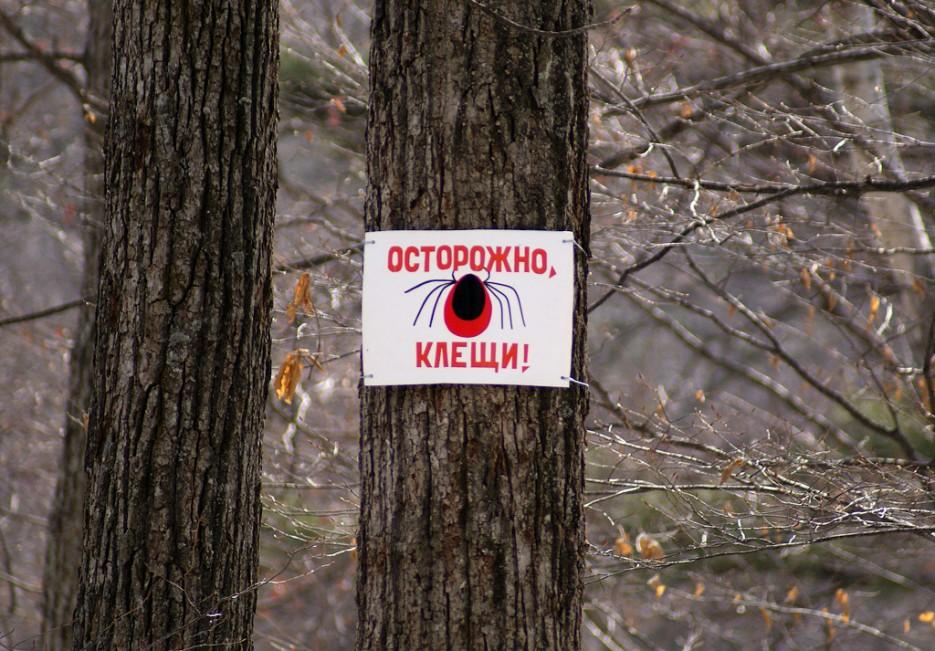 Бойся страшных клещей! | Ботанический сад и Седанкинское водохранилище. Зима-Весна.