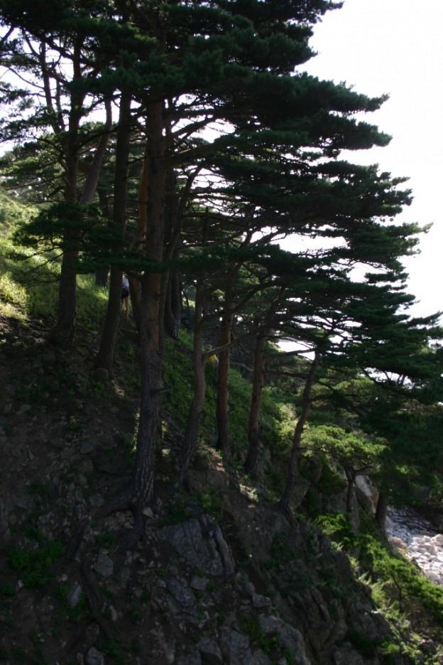 обрыв | Морской заповедник (Хасанский район)