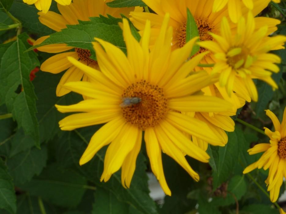 Пчелка села на цветок | Ольгинский район