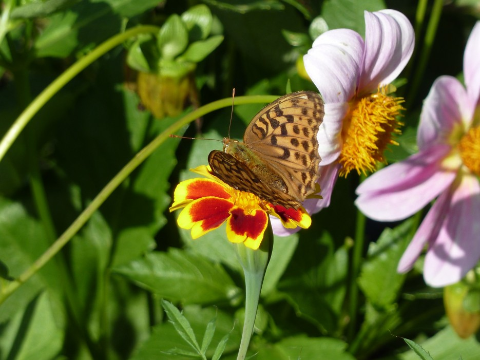 Бабочка   Ольгинский район