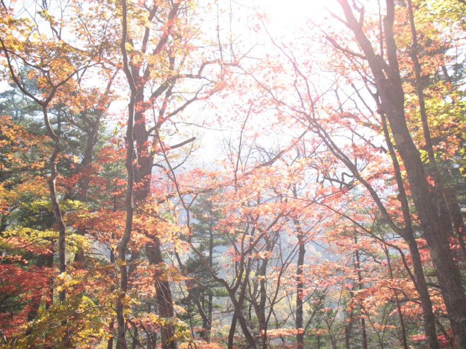 золотая осень | гора Фалаза