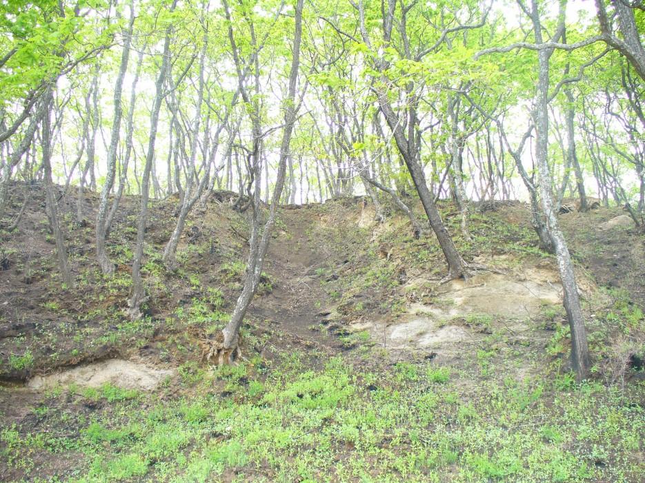 Осенний лес на берегу бухты Южной | Ольгинский район