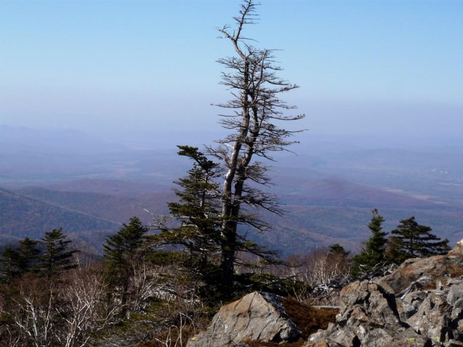 Вид с вершины. | гора Фалаза (Литовка). Шкотовский р-он.