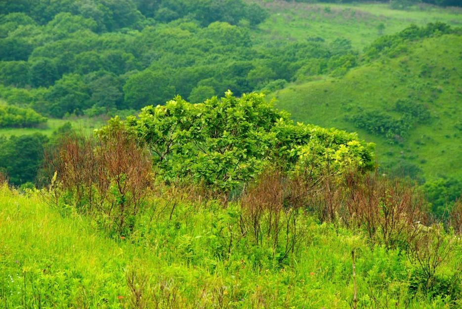 Местная растительность | Полуостров Краббе.