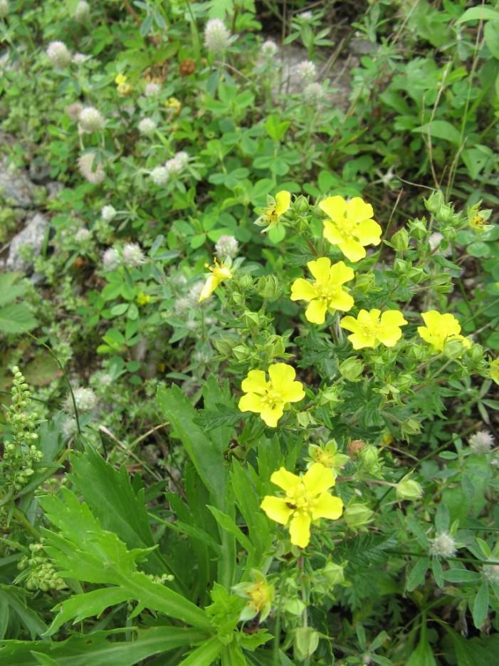 цветики под ногами | гора Русская остров Русский
