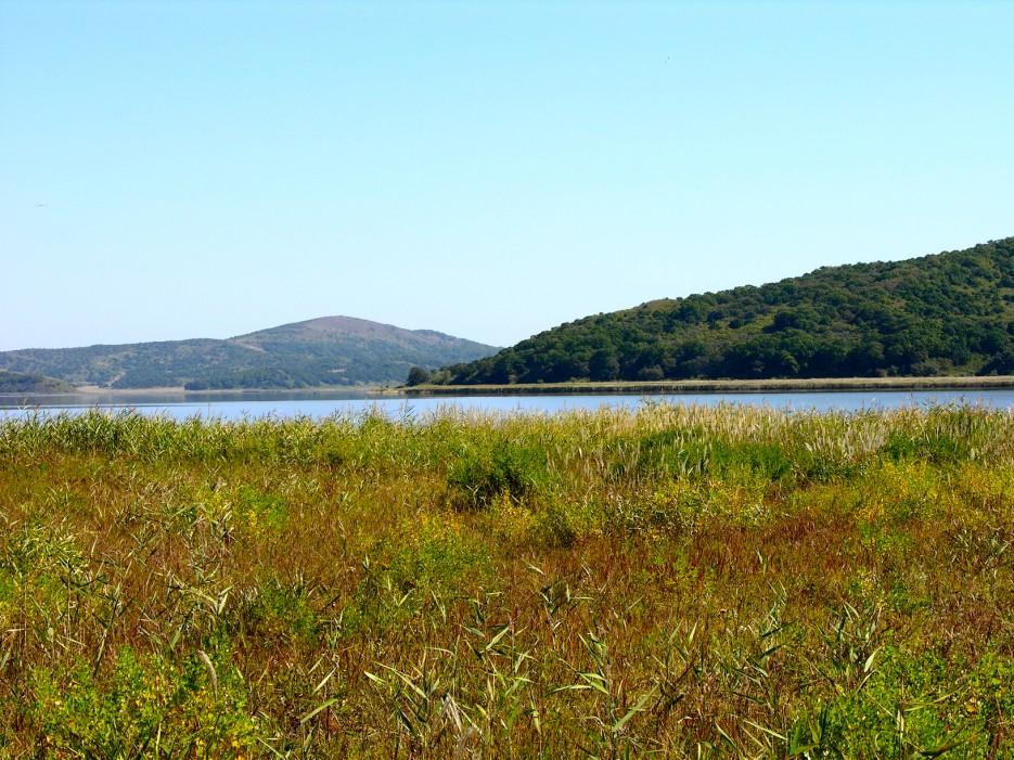 Озеро   Озеро Птичье (Тальми).