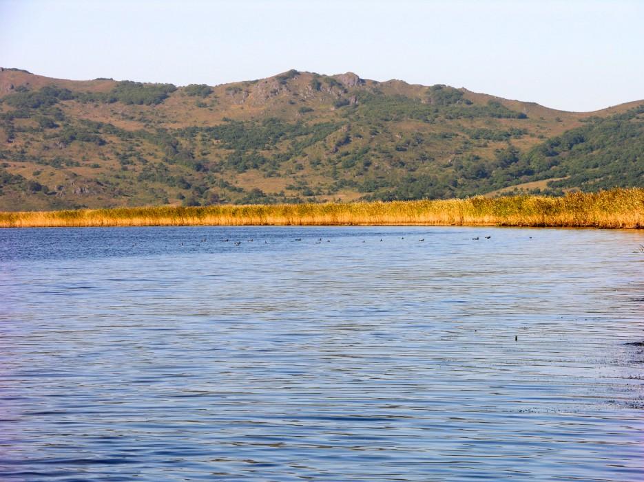 Утки | Озеро Птичье (Тальми).