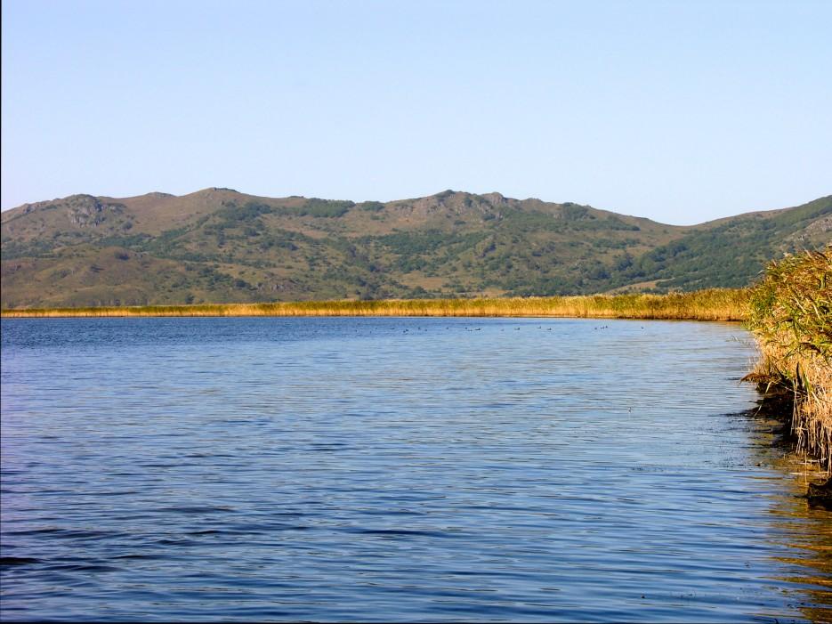 Камыш и утки | Озеро Птичье (Тальми).