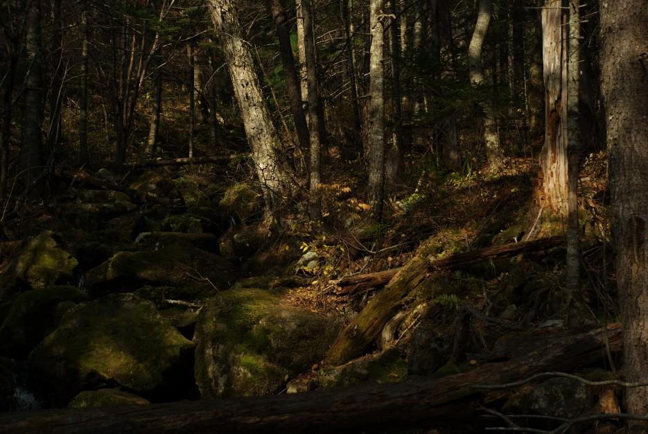 Сгнившие завалы | Беневские (Еломовские) водопады