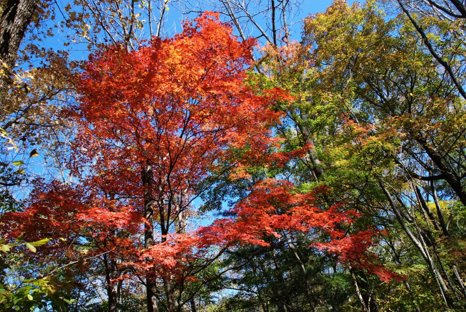 Осенний лес | Ключ Смольный, гора Фалаза.