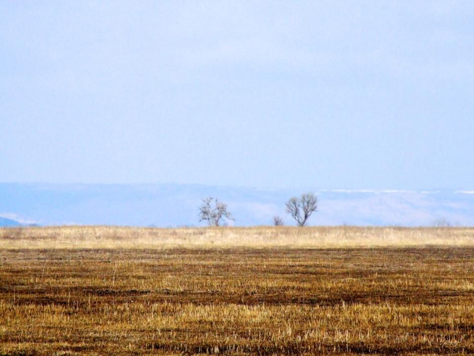 Луга   Весна на протоках и болотах реки Раздольной
